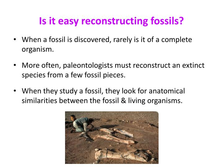 Is it easy reconstructing fossils?