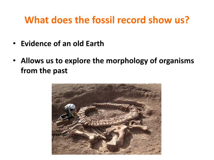 What does the fossil record show us?