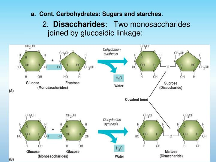a.  Cont. Carbohydrates: Sugars and starches