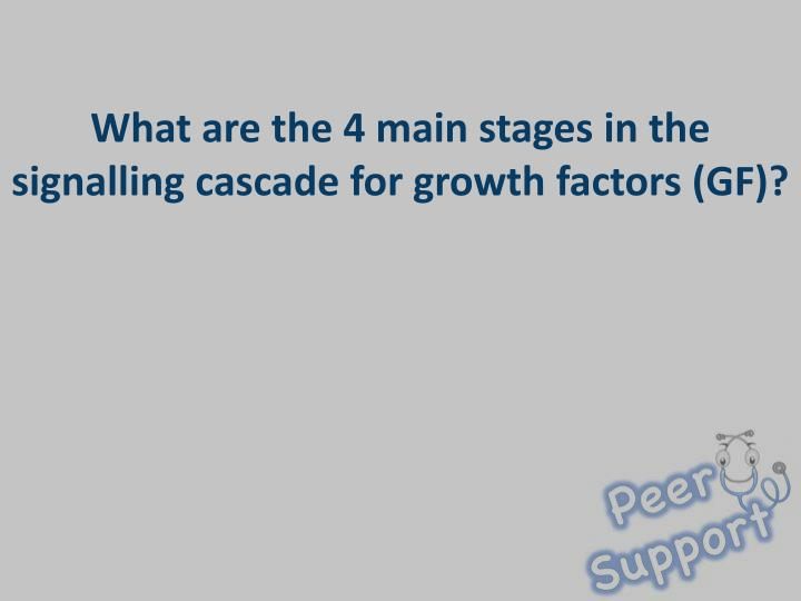 What are the 4 main stages in the signalling cascade for growth factors (GF)?