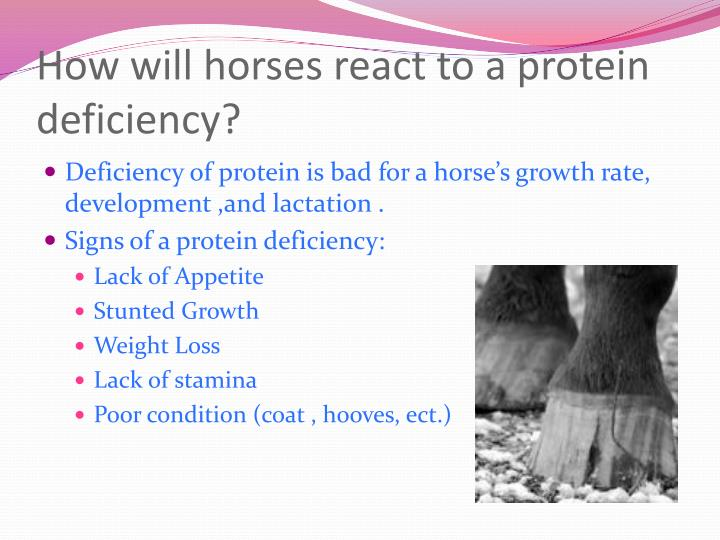 How will horses react to a protein deficiency?
