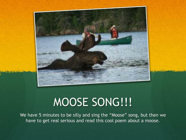 MOOSE SONG!!!
