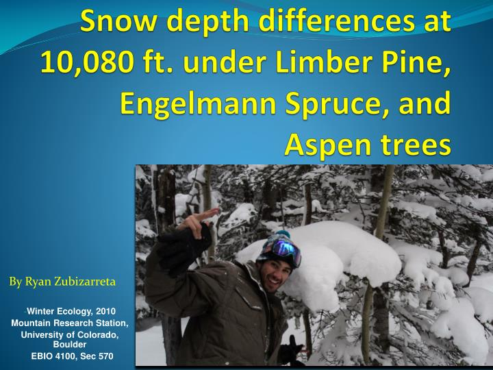 Snow depth differences at 10 080 ft under limber pine engelmann spruce and aspen trees
