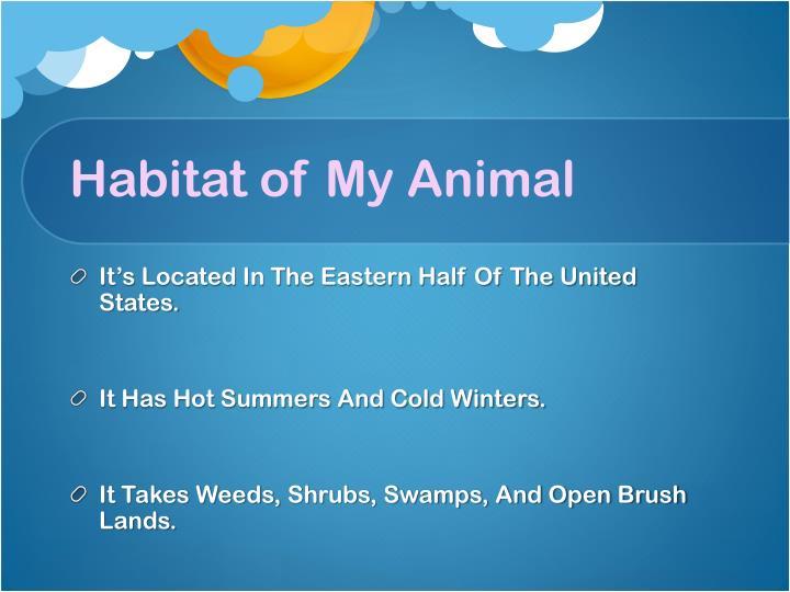 Habitat of My Animal