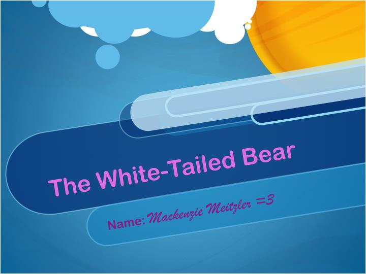 The white tailed bear