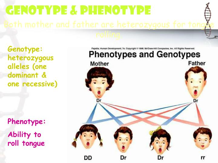 Genotype & Phenotype