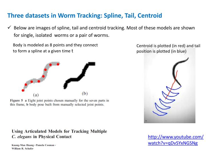 Three datasets in Worm Tracking: Spline, Tail, Centroid