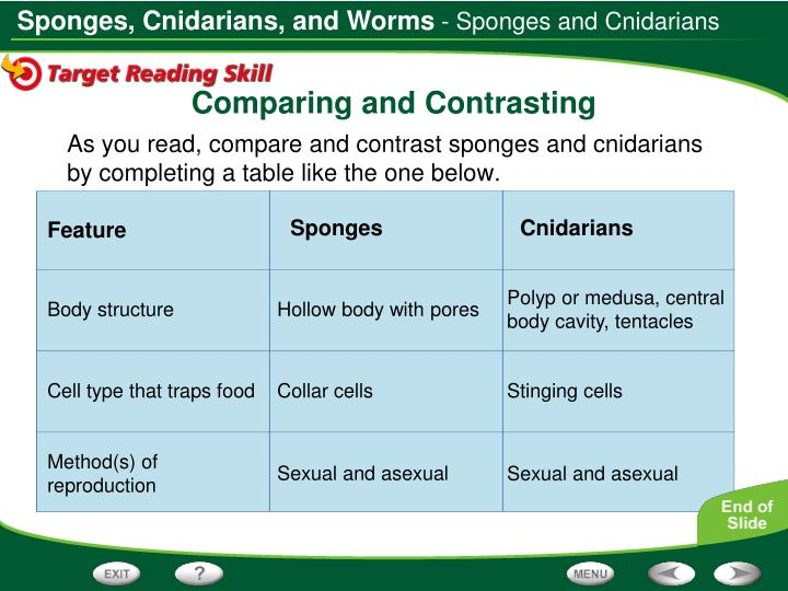 - Sponges and Cnidarians
