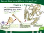 structure of animals