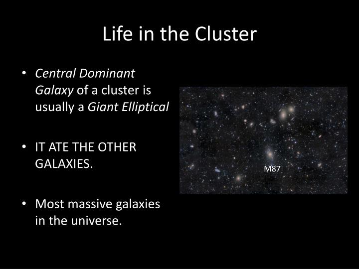 Life in the Cluster