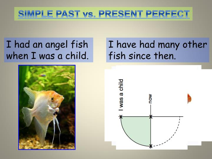 SIMPLE PAST vs. PRESENT PERFECT