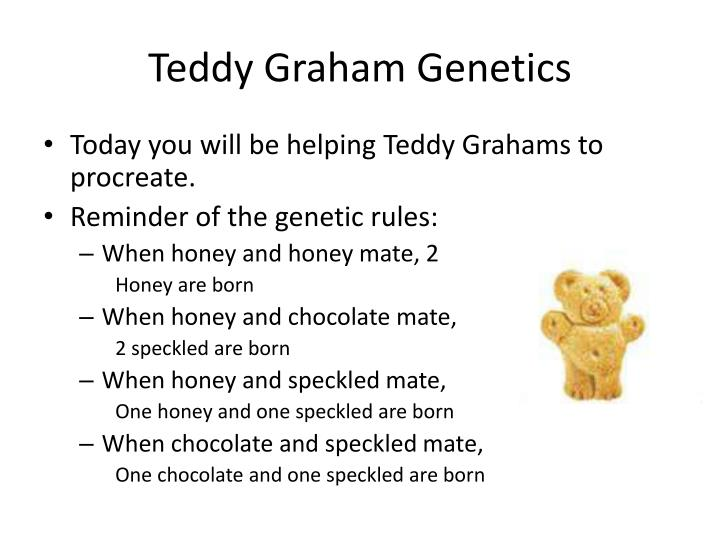 Teddy Graham Genetics
