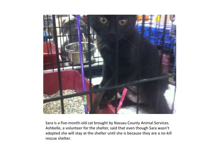 Sara is a five-month-old cat brought by Nassau County Animal Services.