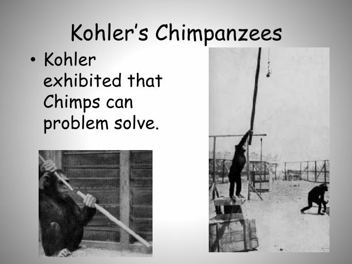 Kohler's Chimpanzees