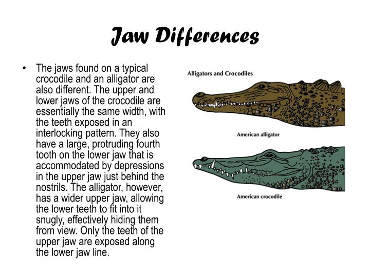 Jaw Differences