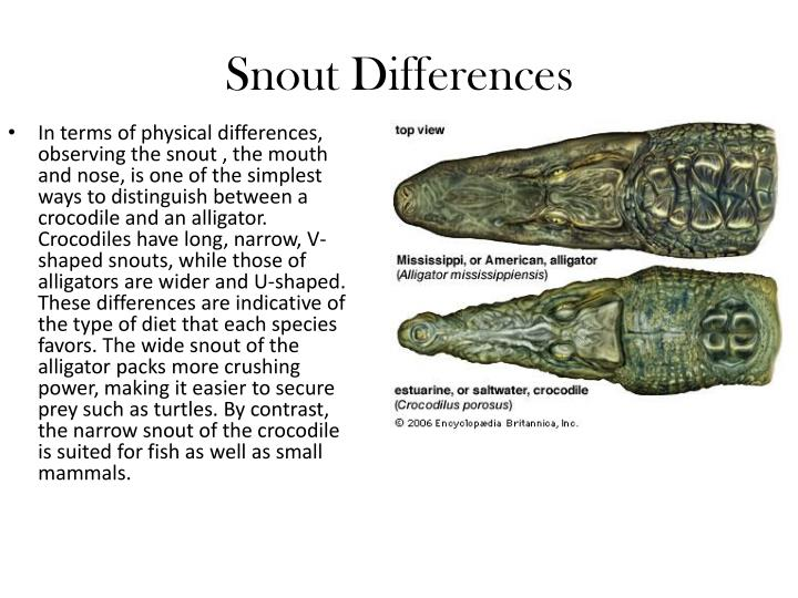 Snout Differences