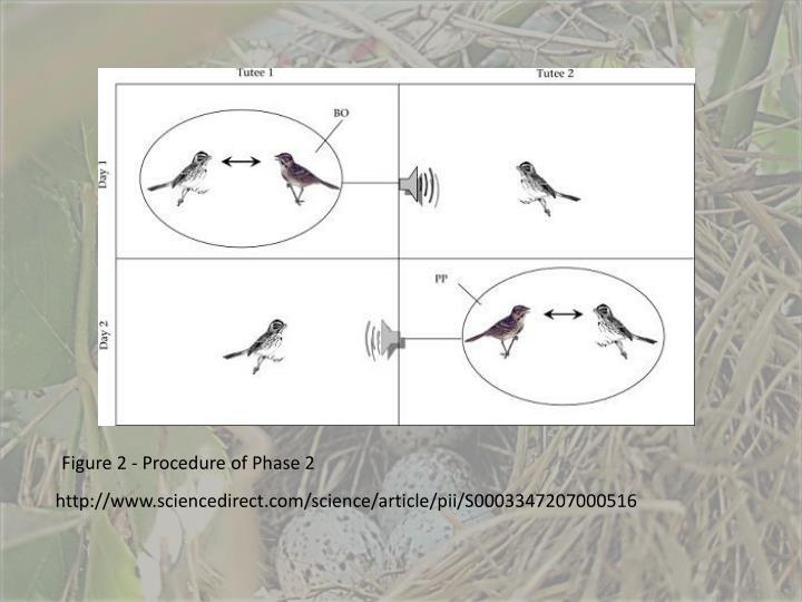 Figure 2 - Procedure of Phase 2