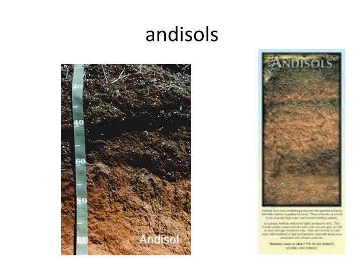 andisols