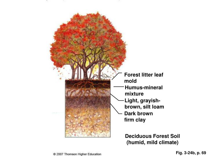Forest litter leaf mold