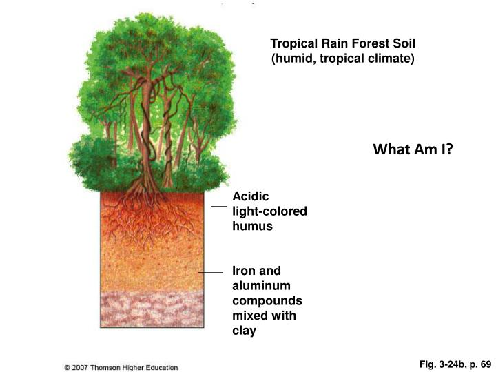 Tropical Rain Forest Soil