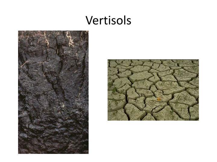 Vertisols