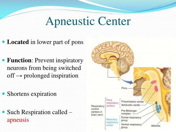 Apneustic Center