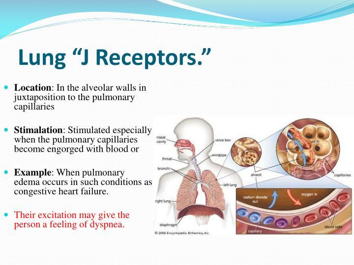 """Lung """"J Receptors."""""""