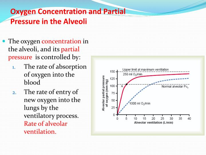 Oxygen concentration and partial pressure in the alveoli