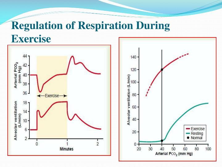 Regulation of Respiration During Exercise