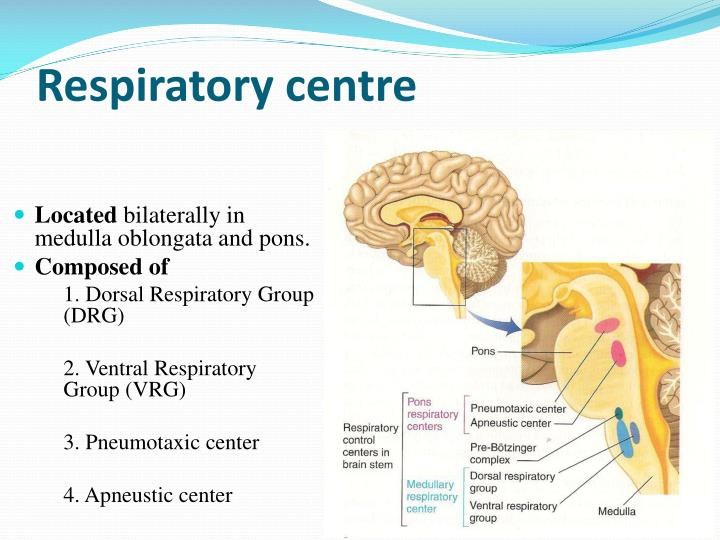 Respiratory centre