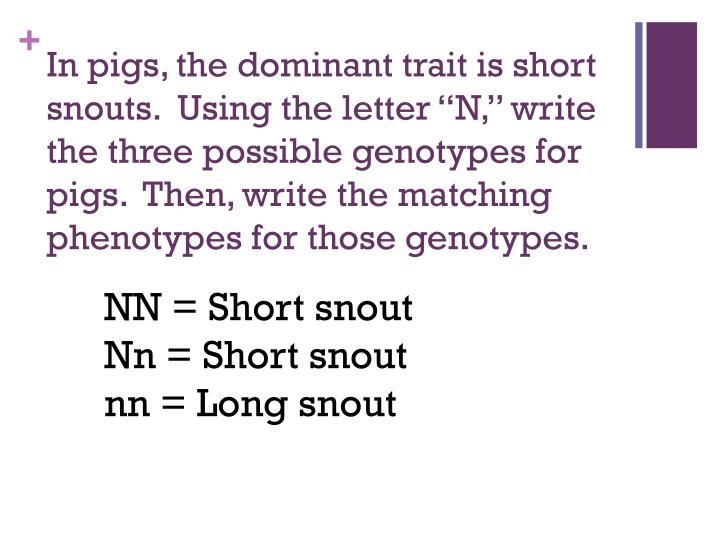 "In pigs, the dominant trait is short snouts.  Using the letter ""N,"" write the three possible gen..."