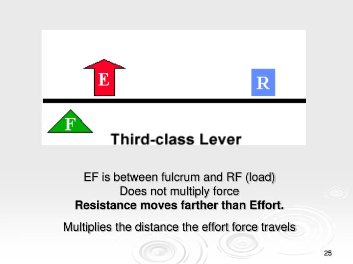 EF is between fulcrum and RF (load)