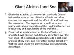 giant african land snail3