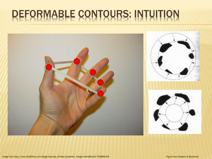 Deformable contours: intuition