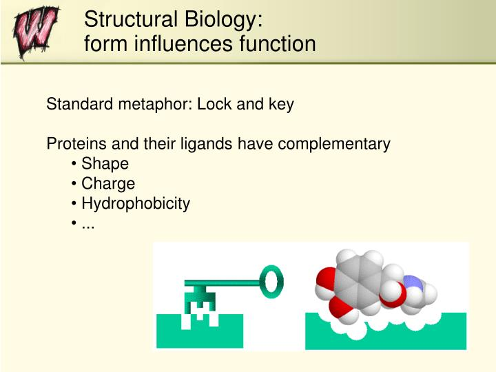 Structural biology form influences function