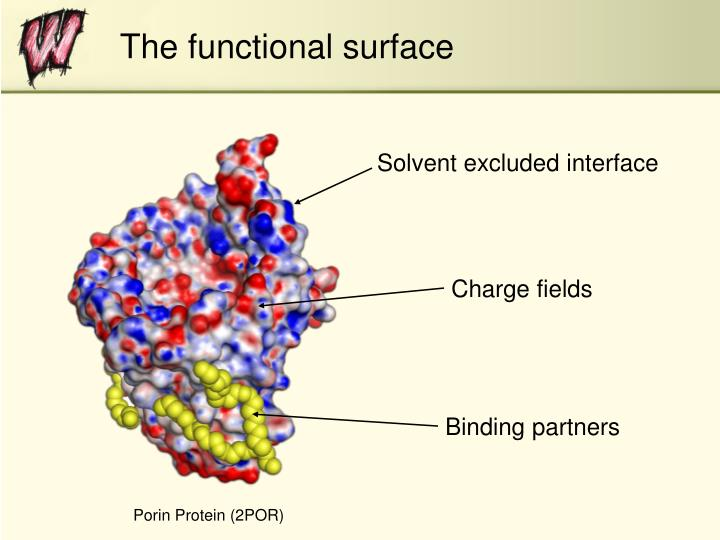 The functional surface