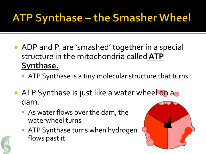 ATP Synthase – the Smasher Wheel