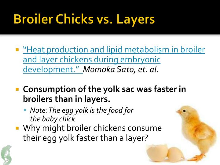 Broiler Chicks vs. Layers