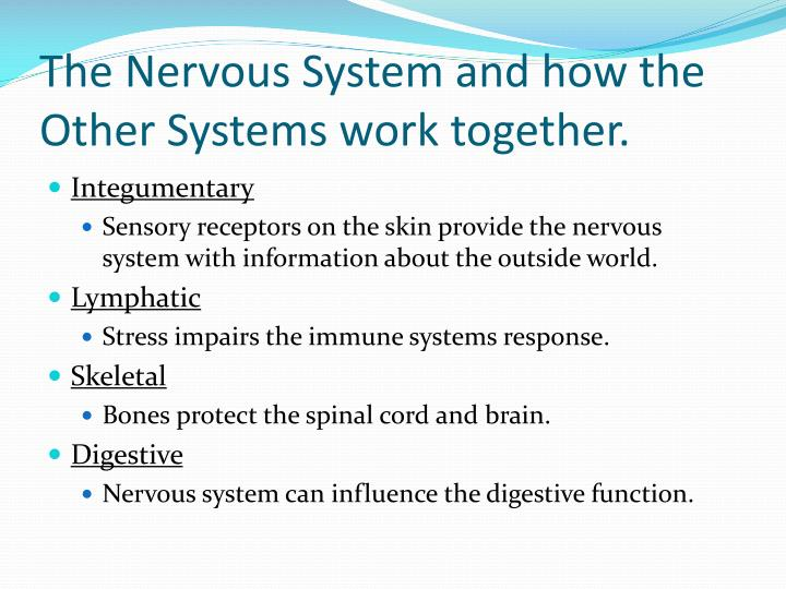 The Nervous System and how the Other Systems work together.