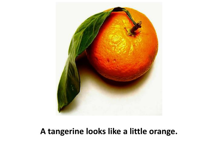 A tangerine looks like a little orange.