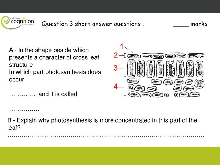Question 3 short answer questions .
