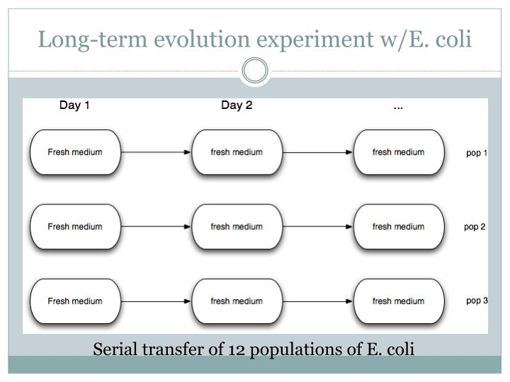 Long-term evolution experiment