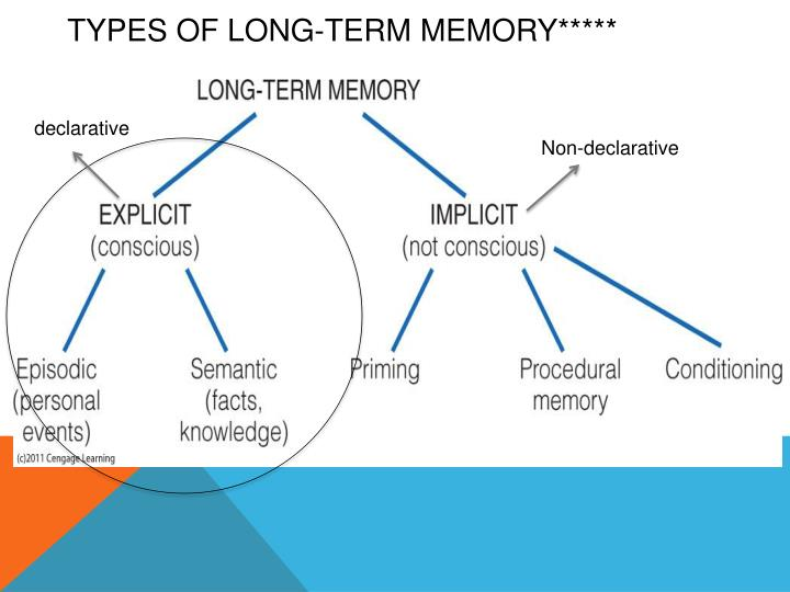 powerpoint presentation on long term memory Presentations text content in evidence-based long-term memory strategies that help studen powerpoint presentation, ppt - docslides slide1 evidence-based long-term memory strategies that help students remember.