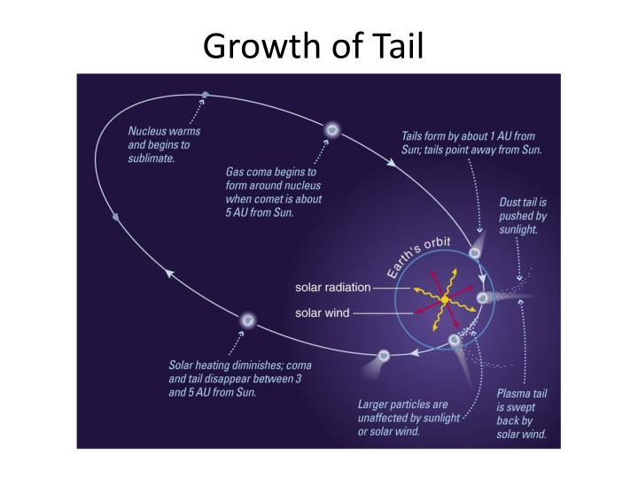 Growth of Tail