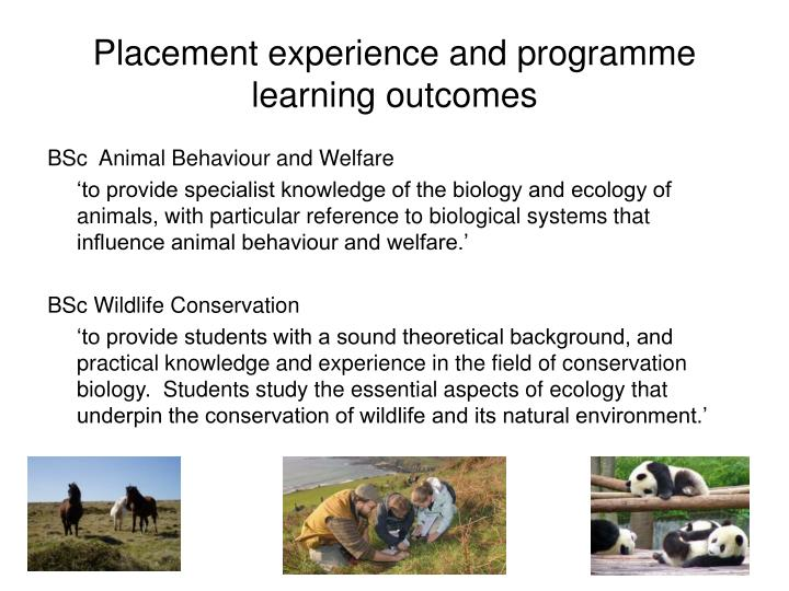 Placement experience and programme learning outcomes