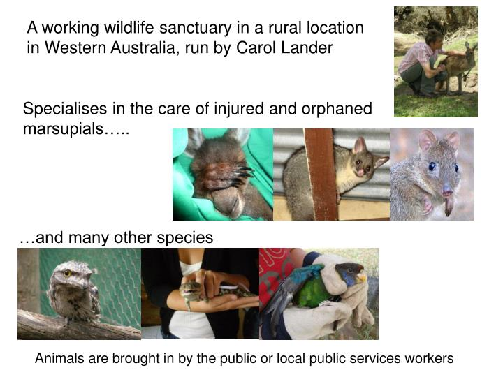A working wildlife sanctuary in a rural location in Western Australia,