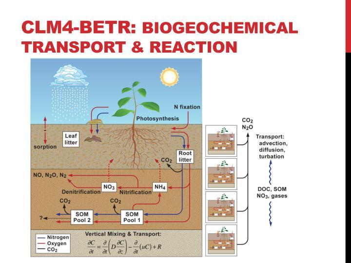 CLM4-BeTR: