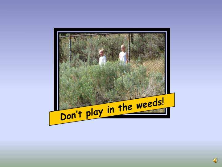 Don't play in the weeds!