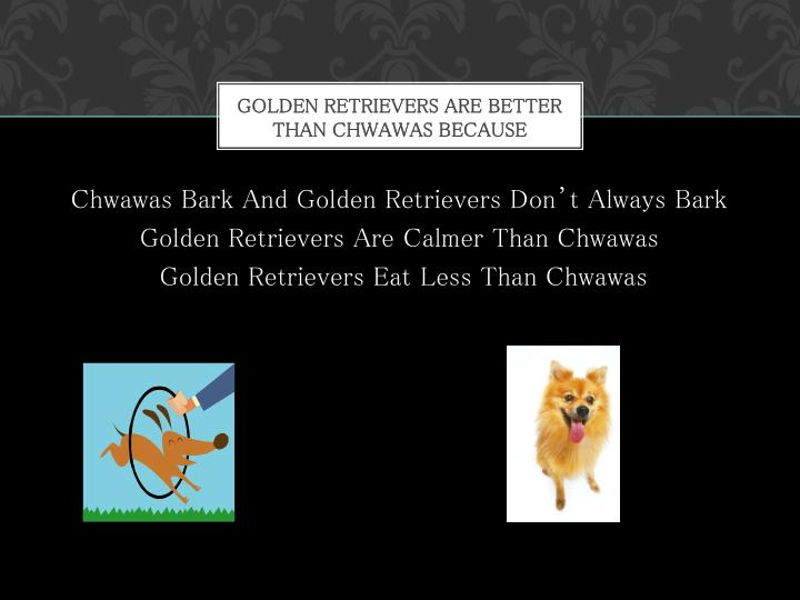 Golden Retrievers are better Than Chwawas Because