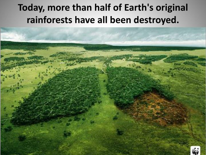 Today, more than half of Earth's original rainforests have all been destroyed.